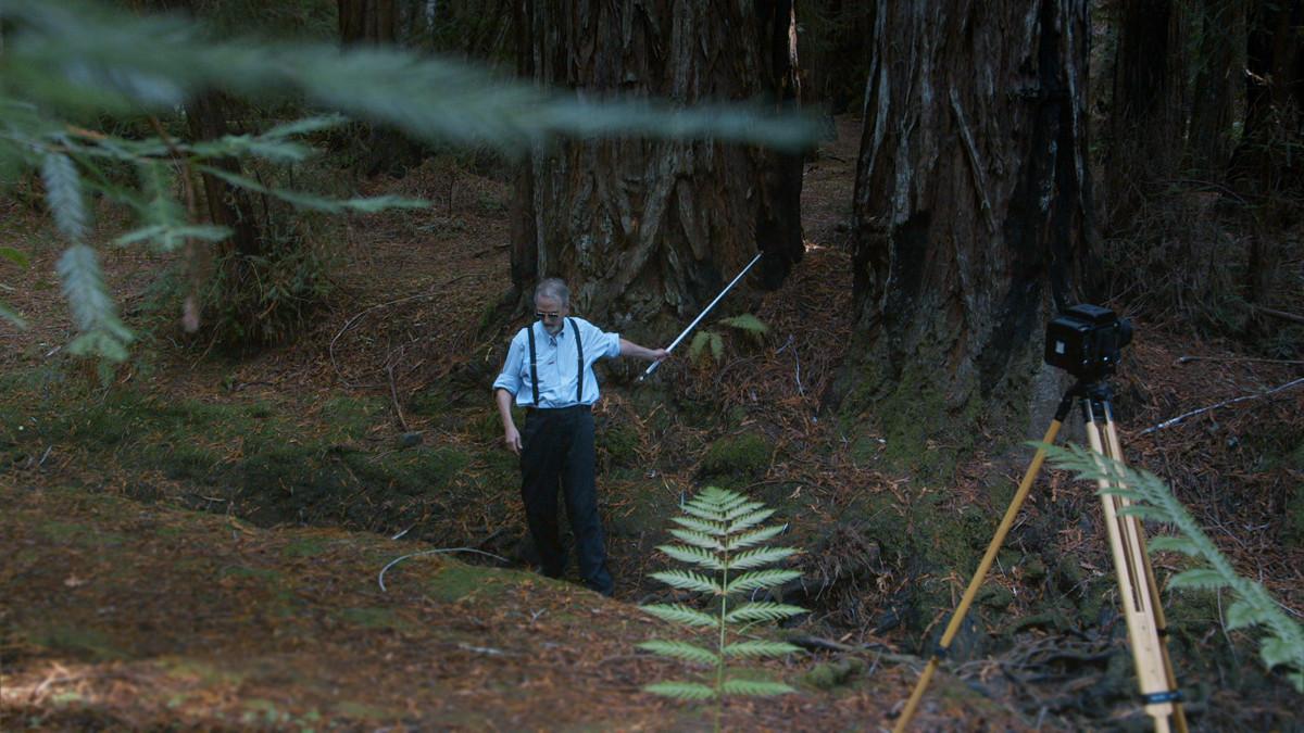 Pete Eckert fotografiert in den Redwood Forests